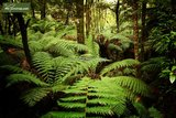 Dicksonia antarctica trunk 130-150cm - total height 270+ cm [pallet]_