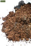 Palm potting compost 10 ltr_