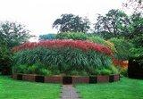 Miscanthus sinensis Ferner Osten - total height 50-60 cm - pot 2 ltr_