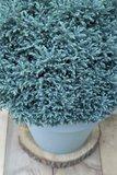 Chamaecyparis pisifera Blue Moon - total height 30+cm - pot 2 ltr_