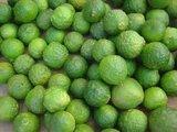 Citrus hystrix - total height 50+ cm - pot 14 x 14 cm_