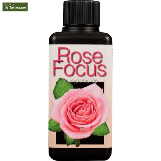Rose Focus 300 ml
