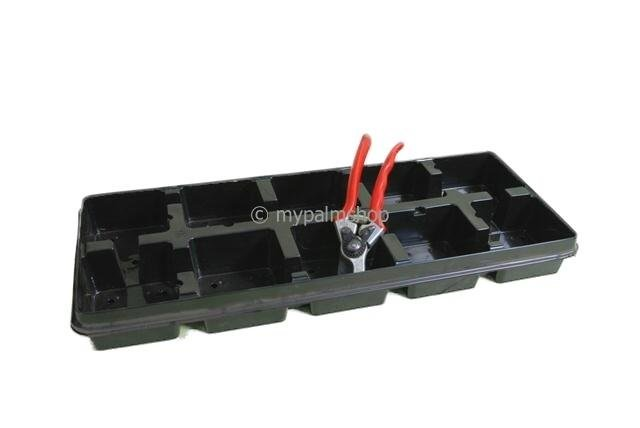 Deep Square Palmpot Rose 2.0 ltr Tray