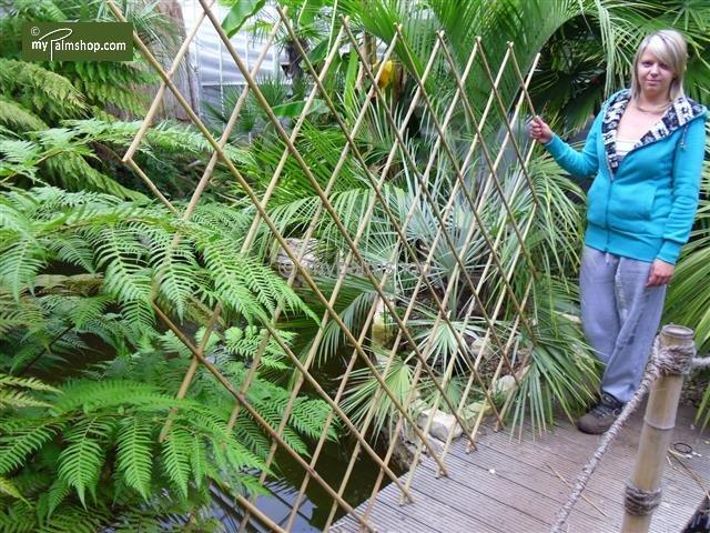 Harmonica bamboo 180 x 180 cm [pallet]