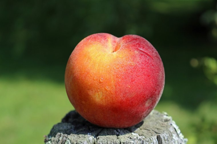 Prunus persica pot Ø 26 cm
