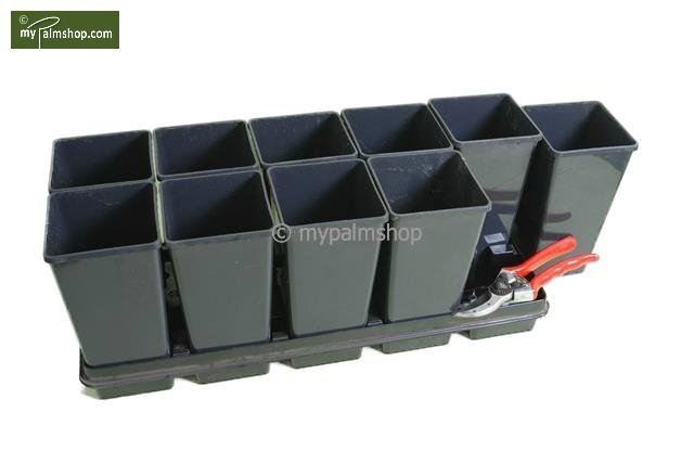 Deep Square Palmpot Rose 2.0 ltr - 1 tray + 10 pots