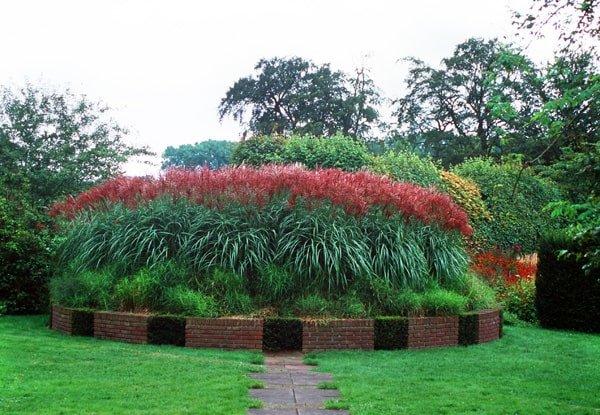 Miscanthus sinensis Ferner Osten - total height 50-60 cm - pot 2 ltr