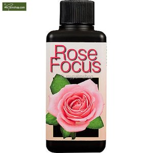 Rose Focus 1 Ltr
