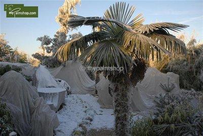 Climate cloth for plants - 100 x 400 cm