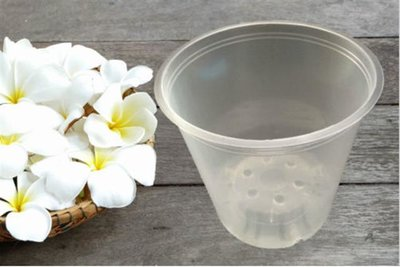 Orchid pot transparent