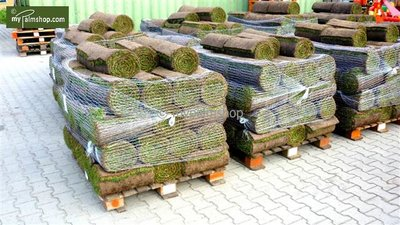 Grass turf 1m²