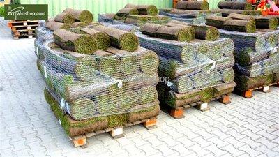 Grass turf 10m²